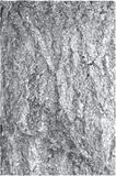 Vettore Grungy della corteccia di albero Fotografia Stock Libera da Diritti