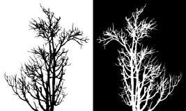 Vettore isolato albero asciutto Immagini Stock Libere da Diritti