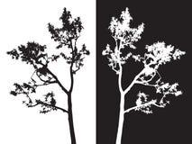 Vettore isolato albero, in bianco e nero Immagine Stock