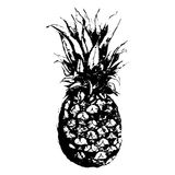Vettore isolato disegnato a mano della frutta monocromatica dell'ananas dell'acquerello Fotografia Stock