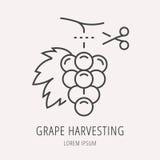 Vettore Logo Template Wine Harvesting semplice Immagini Stock