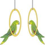 Vettore. pappagalli Fotografie Stock