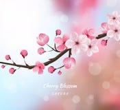 Vettore realistico del fiore di ciliegia, fondo della sfuocatura Fotografia Stock Libera da Diritti