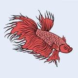 Vettore rosso dei pesci di combattimento del Siam isolato Immagine Stock Libera da Diritti