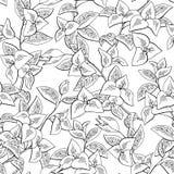 Vettore senza cuciture di coloritura grafico dell'illustrazione di schizzo del fondo del modello del nero del fiore della buganvi royalty illustrazione gratis