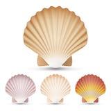 Vettore stabilito della conchiglia del pettine Il ricordo esotico smerla Shell On White Background Illustration royalty illustrazione gratis