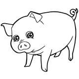Vettore sveglio della pagina di coloritura del maiale del fumetto Fotografia Stock Libera da Diritti
