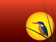 Vettore: Tramonto del martin pescatore della malachite illustrazione di stock