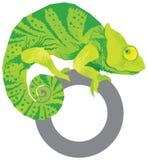Vettore variopinto del camaleonte royalty illustrazione gratis
