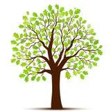 Vettore verde dell'albero Fotografie Stock