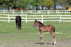 Veulen en paard stock foto's
