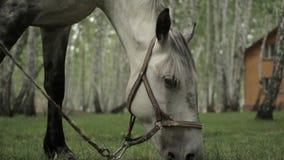 Veulen en paard het weiden stock footage