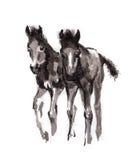 Veulen het oosterse inkt schilderen, sumi-e Royalty-vrije Stock Afbeelding