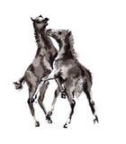 Veulen het oosterse inkt schilderen, sumi-e Royalty-vrije Stock Foto's