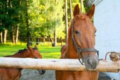 Veulen met merrie op de zomerweiland Royalty-vrije Stock Foto