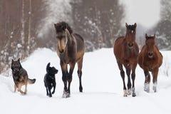Veulennen en honden Royalty-vrije Stock Afbeelding