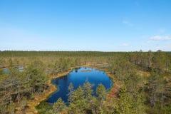 Vew av den estländska Viru Raba myren med flera små sjöar och barrskogen av granar och sörjer royaltyfria bilder