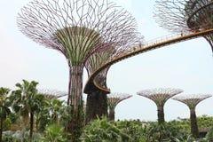 Vew del boschetto di Supertree ai giardini dalla baia il 15 aprile 2014 a Singapore Immagine Stock
