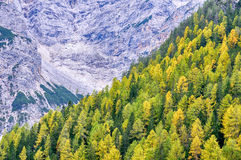 Vew of Dolomite Mountains and Forest Royalty Free Stock Images