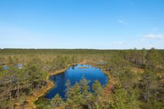 Vew of the Estonian Viru Raba bog with several small lakes and coniferous forest of firs and pines. Amazing view of the Estonian Viru Raba bog with several small royalty free stock images