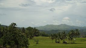 Mountains with tropical forest. Philippines Bohol island. Vew Mountains with rainforest covered with green vegetation and trees on the tropical island stock footage