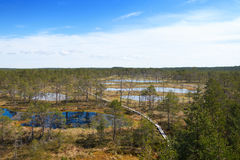 Vew of Viru Raba bog in Estonia with several small blue lakes and small coniferous forest with a wooden walkway passing through Stock Photo