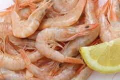 Vey fresh prawns (light pink natural color) from atlantic ocean Stock Photo