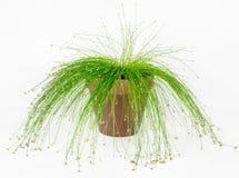 Vezel Optisch Gras, Live Wire royalty-vrije stock foto