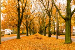 The Veterans of Foreign Wars Parkway in the autumn season royalty free stock image