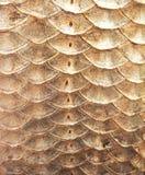 Våg för Crucian karp Royaltyfri Foto