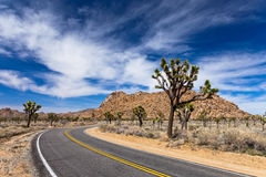 Väg för Joshua Tree Arkivfoto
