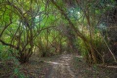 Väg i djungelskog Royaltyfria Bilder