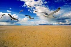 Vögel Stockbild