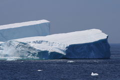 Vögel auf großem Eisberg Stockfoto
