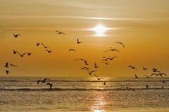 Vögel bei Sonnenaufgang Stockbilder