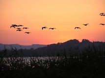 Vögel, die über einen brennenden Himmel fliegen Lizenzfreies Stockbild