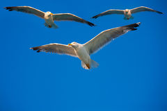 Vögel, die in den Himmel fliegen Stockbild