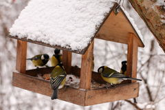 Vögel, die im Winter speisen Stockbild