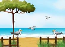 Vögel, die nach Nahrungsmitteln am Strand suchen Lizenzfreies Stockbild