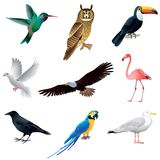 Vögel lokalisiert auf weißem Vektorsatz Stockbild