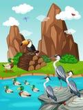 Vögel und Enten durch den Teich Lizenzfreie Stockbilder