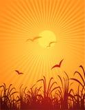 Vögel und Sonne Stockfotografie
