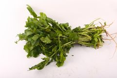 Vgetable watercress. Fresh vegetable watercress on white royalty free stock photography