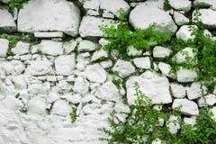 Vägg av den vita stenen med sidor och växter Arkivbild
