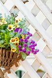 Väggen monterade hängande korgar med ett område av sommar blommar Arkivfoto
