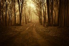 Vägho en konstig mörk skog med dimma i sen höst Royaltyfri Fotografi