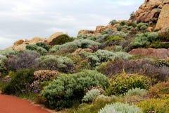 Végétation côtière Photographie stock