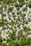 Végétation générique de montagne Silhouette d'homme se recroquevillant d'affaires Arbres et terrain Images libres de droits