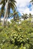 Végétation luxuriante sur l'île du Pacifique Images libres de droits