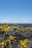 Végétation sur la lave en Hawaï Images libres de droits